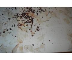 Specjalistyczne sprzątanie po zgonach zwłokach Świdnica