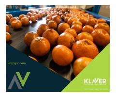 Praca od zaraz – Holandia, Utrecht – praca na produkcji