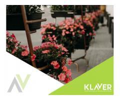 Storczyki i inne kwiaty doniczkowe, praca od zaraz, Holandia