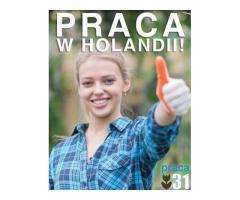 PRACOWNIK PRODUKCJI - Holandia